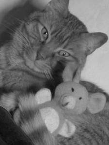 Caramel et sa souris... amis pour la vie