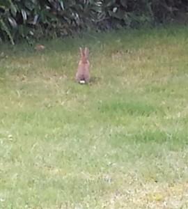 Un visiteur dans le jardin un matin